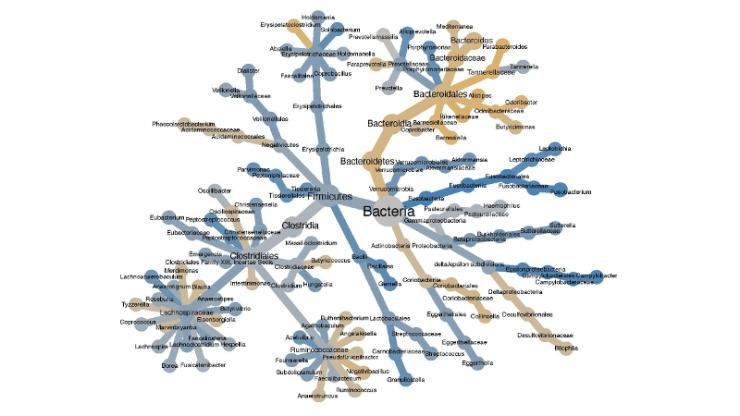 bacteria tree