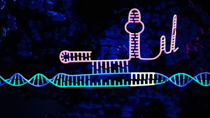 CRISPR hairpin